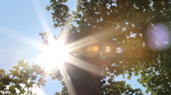 Sun shines through summer deciduous trees. - stock footage