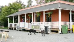 Restaurant in the park - with people and three dogs - nature (trees) Stock Footage