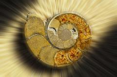 ammonite from madagascar, cut open - stock photo
