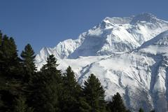 Pine forest as silhouette against the ice-capped massive of annapurna ii near Stock Photos