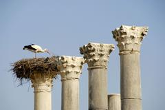 Pillars with a storks nest white stork ciconia ciconia archaeological excavat Stock Photos
