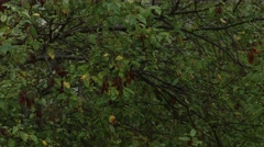 Rain drenches trees in summer storm Stock Footage