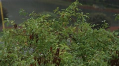 Heavy Rain on a Tiny Tree Stock Footage