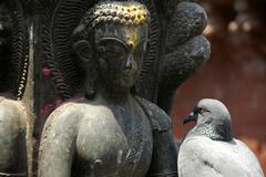 Pigeons faces buddha statue seto macchendranath temple kel tole kathmandu nep Stock Photos