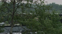 Trees Blowing in The Rain Stock Footage