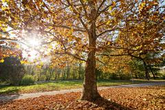 Trees with fallen leaves Stock Photos