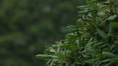 Close Up - Bush in The Rain Stock Footage