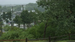 Rain and Trees in The City Stock Footage