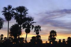 Stock Photo of palm savanna at sunset, gran chaco, paraguay