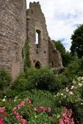 Castle ruin in the old town, rose bed, dreieichenhain, hesse, germany Stock Photos
