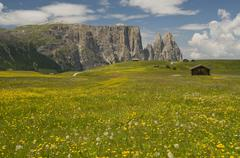 Flower meadow in front of the schlern mountain, seiser alm, alpe di siusi, do Stock Photos
