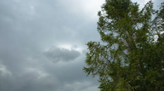 Gust before the rain Stock Footage