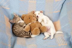 a kitten and a puppy sleeping side by side, lying next to a teddy bear - stock photo
