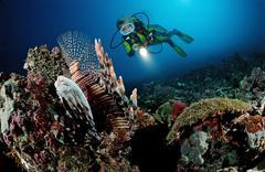 Diver observing a red lionfish (pterois volitans), maldive islands, indian oc Kuvituskuvat