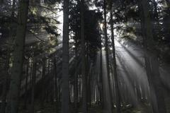 sun rays in a forest - stock photo