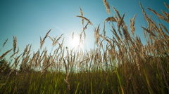Green grass and blue clear sky with sun Stock Footage