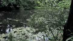 Tranquil marsh scene - stock footage