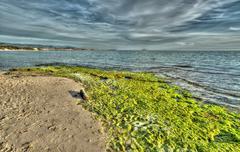 Green shore Stock Photos