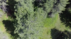Flying over Trees - Aerial Flight Stock Footage