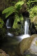 quinault area, olympic national park, washington, usa - stock photo