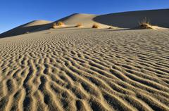 sand dune of erg tihodaine, wilaya tamanrasset, algeria, sahara, north africa - stock photo