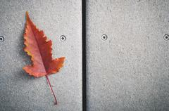 Red fall leaf - stock photo