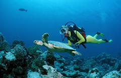 Hawksbill turtle (eretmochelys imbricata) and a scuba diver, maldive islands, Kuvituskuvat