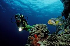 Scuba diver at a coral reef, maldive islands, indian ocean Kuvituskuvat
