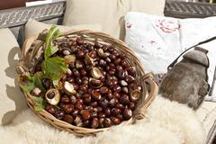 Horse chestnuts or conkers (aesculus hippocastanum) with chestnut leaves, see Stock Photos