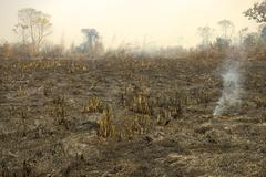 Burnt down forest after a bush fire, slash and burn, chitwan national park, n Kuvituskuvat