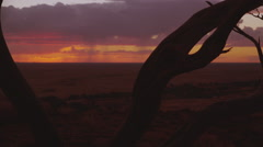 Stock Video Footage of Australian outback sunset desert. tree branch silhouette 4K AVAILABLE