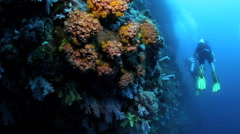 Scuba divers swimming along coral reef wall Stock Footage