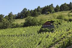 Wine growers' cottage in a vineyard, benediktusberg near retzbach, mainfranke Stock Photos