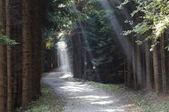 forest trail with rays of sunshine, buschandlwand mountain, wachau valley, wa - stock photo