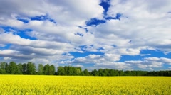 Summer yellow flowers field landscape, time-lapse. - stock footage