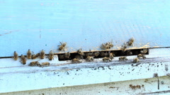 Bees at the entrance to the hive close up Stock Footage