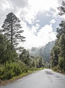 Wet road surrounded by trees and shrubs La Palma Canary Islands Spain Europe - stock photo