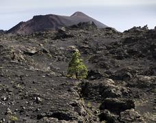 vulkan teneguia auf la palma | volcano teneguia at la palma - stock photo