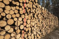 Stacked and marked Spruce Picea logs Bavaria Germany Europe Stock Photos