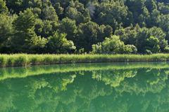 Krka river with reeds Krka National Park Skradin Sibenik Knin Dalmatia Croatia Stock Photos