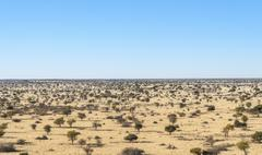 Wide landscape with trees Kalahari Namibia Africa - stock photo