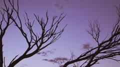 Australian outback red sunset desert. Tilt down tree silhouette 4K AVAILABLE Stock Footage