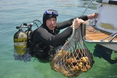Sponge diver Kristijan Jaram with a net full of sponges of the genus Dalmata Stock Photos