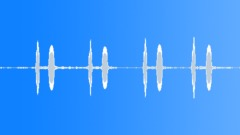 Bird. Common Cuckoo Sound Effect