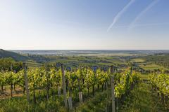 Eisenberg vineyard Eisenberg an der Pinka quaint wine growing region Southern Stock Photos