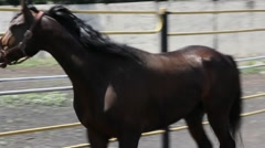 Horse in paddock  Stock Footage
