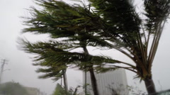 Palms whipping in the wind during Hurricane Stock Footage