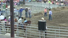 Rodeo lasso calf -good work from horse Stock Footage