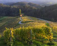 Herzerlstrasse a heart shaped road amidst the vineyards in the evening light Stock Photos
