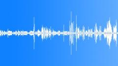 Parakeet Äänet. Loopable. Äänitehoste